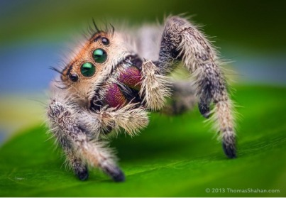 Cute-Spider-Background-5