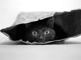 Black-Cat-For-Halloween-7