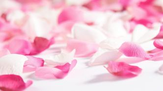 Pink-Flowers-and-Rose-Petals