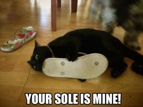 sole kitty