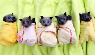 bat burrito 1