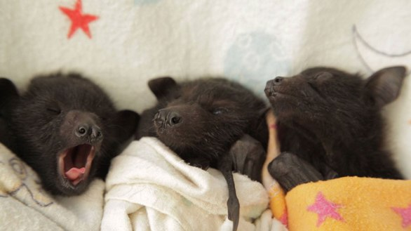 bat burritos 3