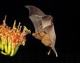 bat flowers 2