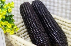 black corn 3